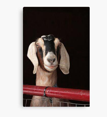 Hey Goat ! Canvas Print