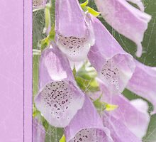 Sympathy Card With Pretty Foxgloves by Moonlake