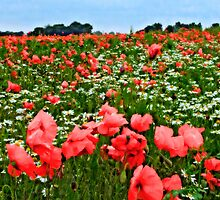 Poppyland, Colby, Norfolk by JohnYoung