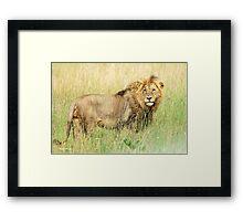 I HATE CAMERAS! - THE LION – Panthera leo - LEEU Framed Print