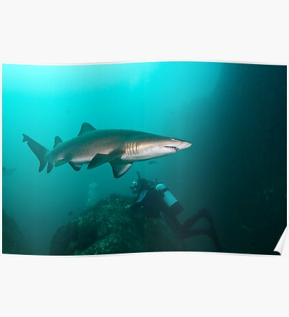 Pete with North Rock Sharks. Poster