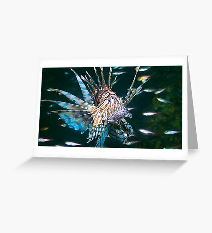 Brisbane Lionfish Greeting Card