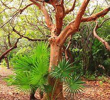 A tropical tree by zumi