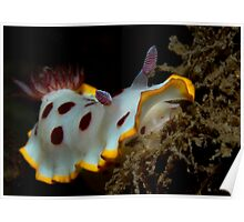 Fly Point Strawberry and Cream Nudi Poster