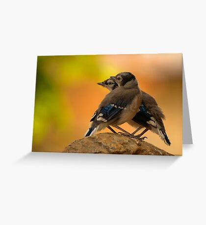 Baby Jays Greeting Card