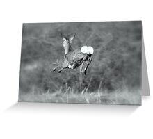 Leaping deer (Animals) Greeting Card