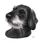 Waldi, Wire haired Dachshund by Pencilpastel