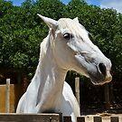White Horse by Soniris