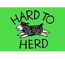 Hard to Herd Photographic Print