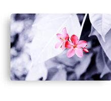 Maroon flowers Canvas Print