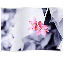 Maroon flowers Poster