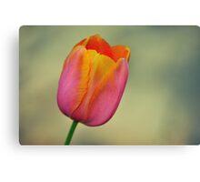 Pastel Tulip Canvas Print