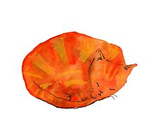 Ginger Cat by lucydill