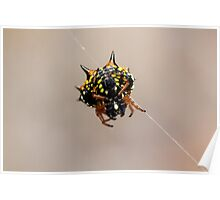 Jewell Spider Poster