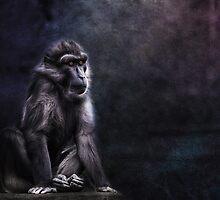 Mr. Black by lucyliu