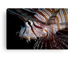 Young Lionfish Canvas Print
