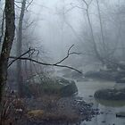 Foggy Day on the Unami Creek by MotherNature