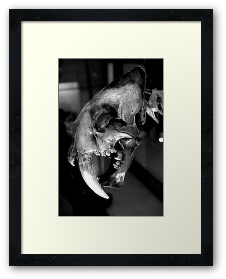Sabre-toothed Cat Skull by Jonathan Goddard