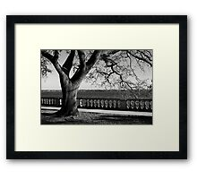 Live Oak River View Framed Print