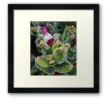 Green succulent weeping sap Framed Print