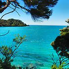 At Abel Tasman National Park by andreisky
