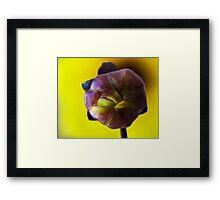 Dahlia Mystic Illusion bulb Framed Print