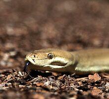 Olive Python by Deborah  Janke