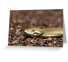 Olive Python Greeting Card