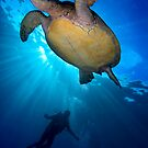 Turtle Diver by ZeamonkeyImages