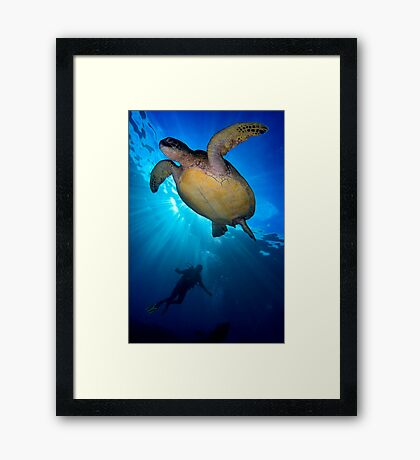 Turtle Diver Framed Print