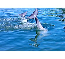 Dolphin tails Photographic Print