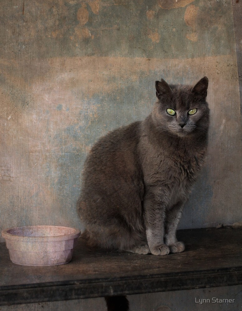 Barn cat by Lynn Starner