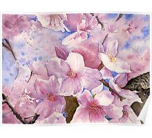 Cherry Blossom , Sakura , Art Watercolor Painting print by Suisai Genk Poster