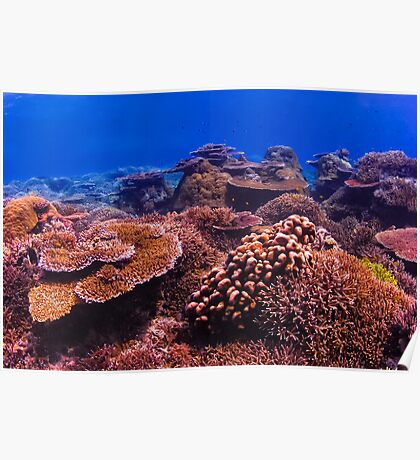 The Living Reef Poster