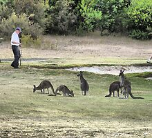 Golfing amongst the Roo's (1) by cullodenmist
