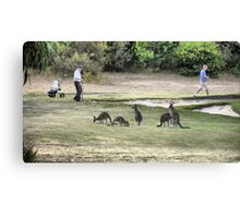 Golfing amongst the Roo's (1) Canvas Print