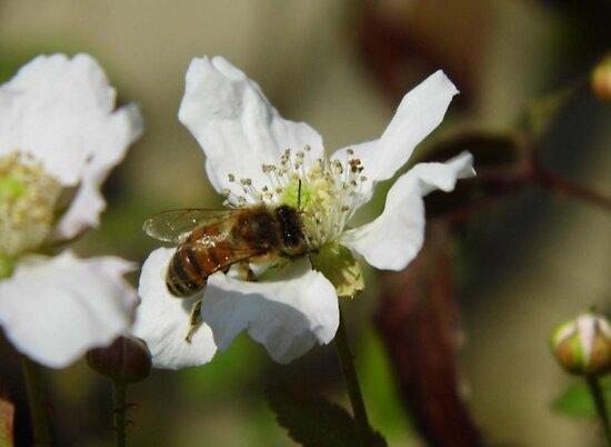 Bee On The Bloom by WildestArt
