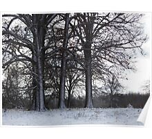Cold Trees Poster