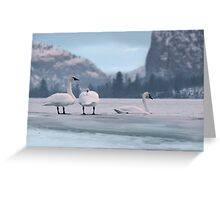 Trumpeters on Swan Lake  Greeting Card