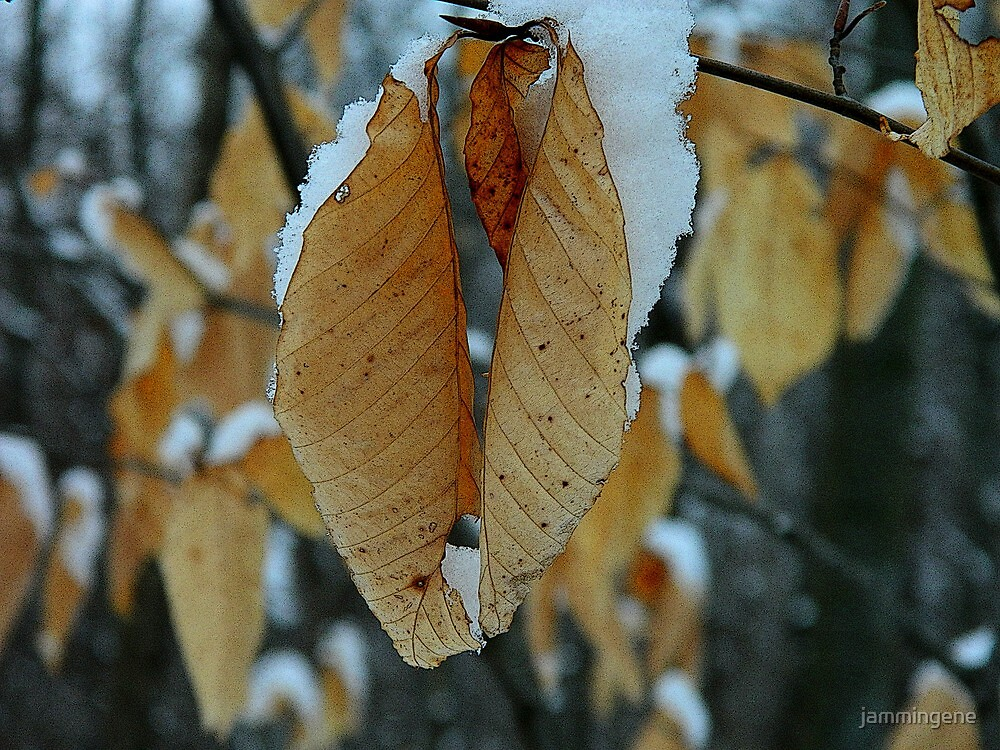 Snowy leaves by jammingene