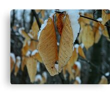 Snowy leaves Canvas Print