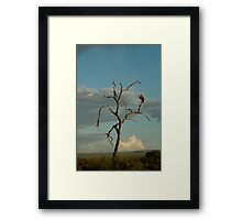 Am I the only one around here? Framed Print