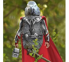 Grey parrot Thor Photographic Print
