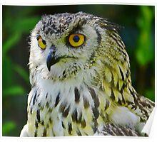 Eurasion Eagle-owl Poster