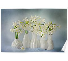 Narcissus 'Paperwhites' Poster
