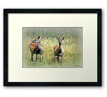 Roe Deer-Dorset Framed Print
