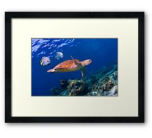 Sea Turtle and Entourage Framed Print