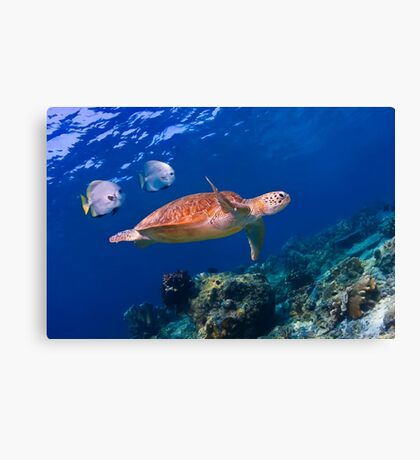 Sea Turtle and Entourage Canvas Print