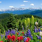Mountain Wildflowers by Michael Andersen