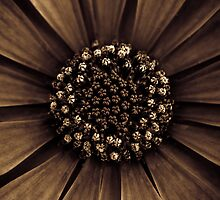 A nutella-dipped blossom to start your day by alan shapiro